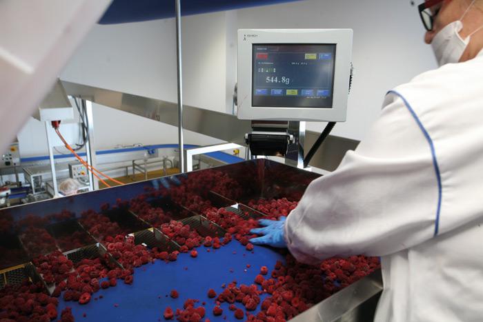 Naważarka FFW Ishida zwkładem produktowym wpostaci świeżych malin. Jeden zetapów roboczych